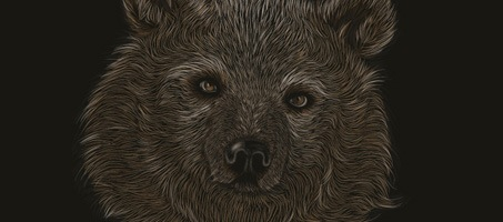 How to Create a Scratchboard Effect Bear Portrait illustrator
