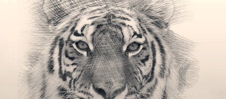 Create an awesome sketch photo effect in photoshop