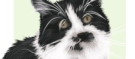 Sir Charles A Vector Cat Created Using Illustrator