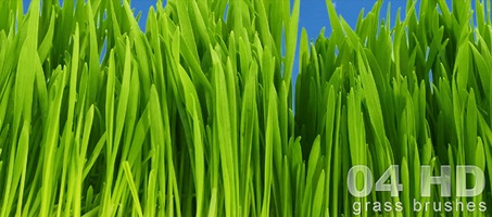 HD High quality Free Photoshop Grass Brushes