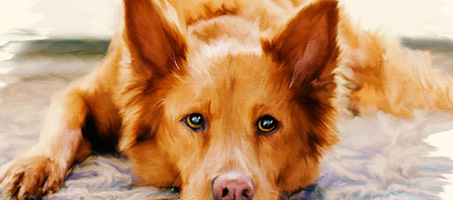 How to Create a Painted Pet Portrait Effect in Adobe Photoshop